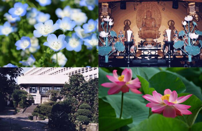 早稲田宝泉寺の外観や境内写真