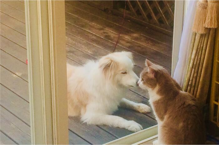 犬、猫の写真